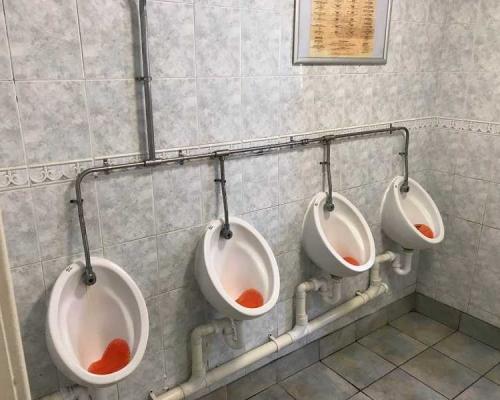 toilet-refurb